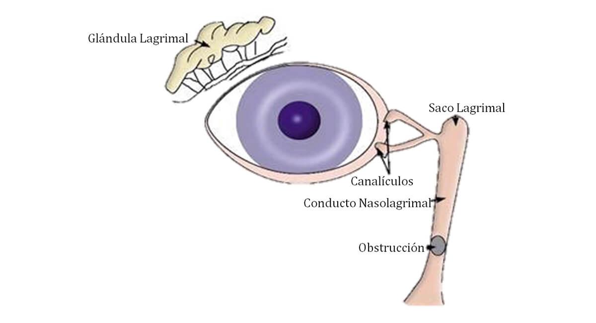 Anatomia sistema lagrimal esp